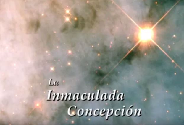 sp-immaculate-conception
